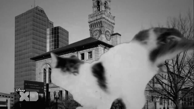 File:Kitten climbing on building, 2.jpg