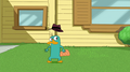 Perry is disturbed