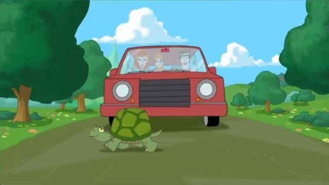 File:A turtle blocks the car from moving.jpg