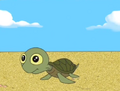 Young turtle.png