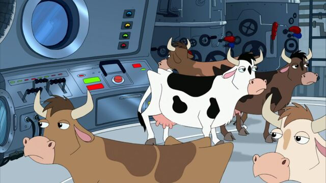 File:Cows inside the ship.jpg