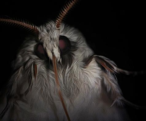 File:Moths.png