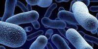 Microbiophobia