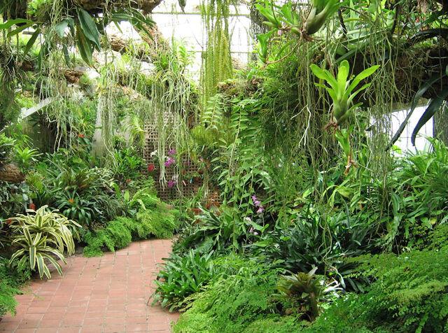 File:Plants.jpg
