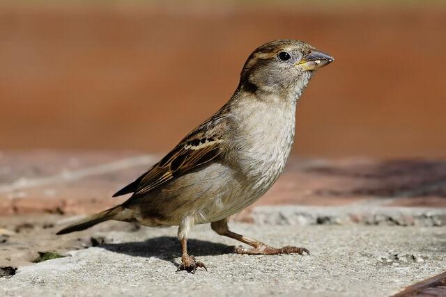 File:Birds.jpg
