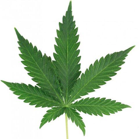 File:Sticker-feuille-de-cannabis.jpg