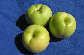 File:Green Nectarine (unripened) .jpg