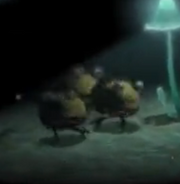 Dwarf Bulbears