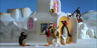 Pampering Pingu