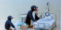 Pingu's Visit to the Hospital