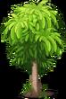 Plant Mango Tree