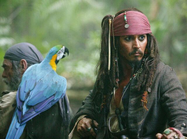File:Jack parrot.jpg