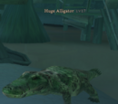 Huge Alligator