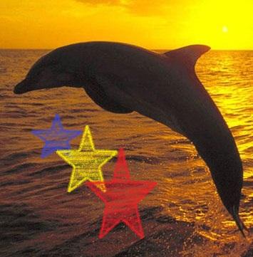 File:Free Dolphin Screen1saver 14412.jpg