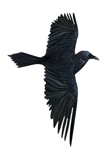 File:Raven1.png
