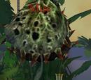 Bite (Fly Traps)