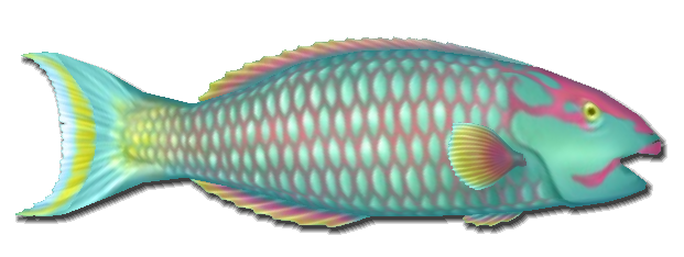 File:Fish 6.png