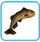 Brown_Trout.png