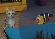 Kot i ryba