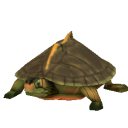 Indian Roof Turtle.png