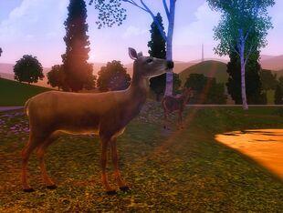 Deer by miaminight-d4rvkxd