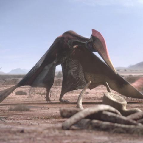 File:AfricanPterosaurPortrait.png