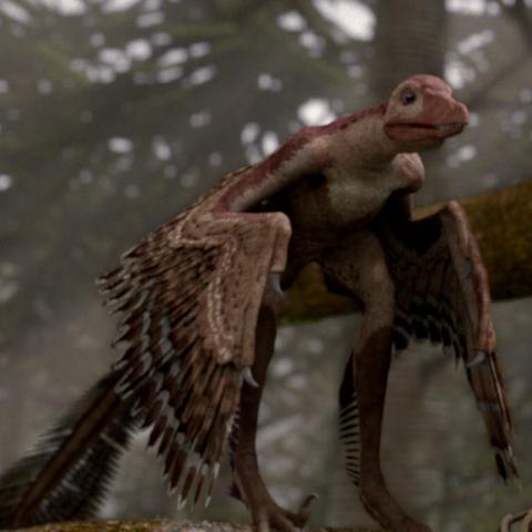 File:SinornithosaurusPortrait.png