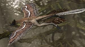 File:Microraptor 1.png