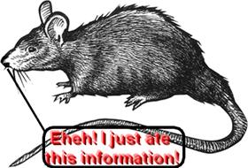 File:Rat information.png