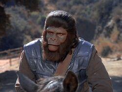 First gorilla guard