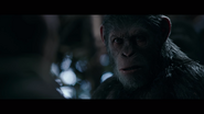WPOTA Caesar tells Preacher he fights only to protect the Apes
