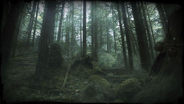 File:Woods Dawn.jpg