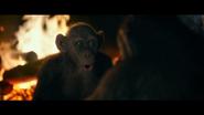 WPOTA Bad Ape 3