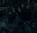 Caesar's Council of Apes (CE)