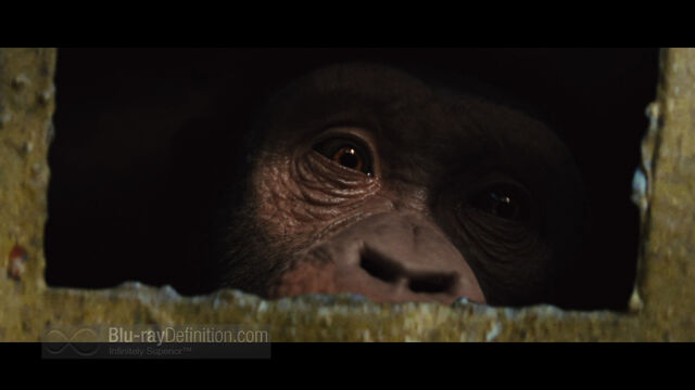 File:Rise of the Planet of the Apes02.jpg
