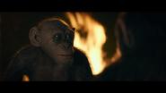WPOTA Bad Ape 7