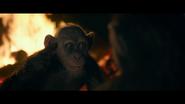 WPOTA Bad Ape 4