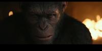 Caesar's Ape Colony (CE)