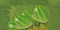 Quin Melon