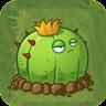 Ball CactusAS