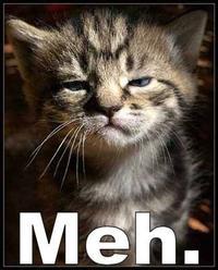 File:Meh cat.jpg