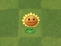 File:Sunflower photo fan rs club.jpeg