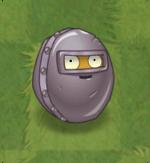 Wall-nut PF2