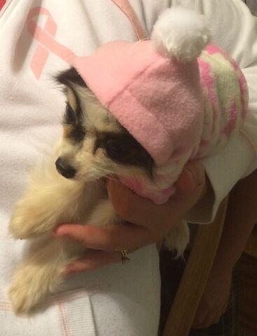 File:My Dog....Sadie.jpeg