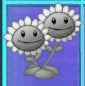 File:New Twin Sunflower Grey.jpeg