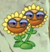 File:TwinSunflowerShades.jpeg