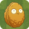 Berkas:Giant Wall-nut2.png