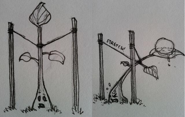 File:Treeconcept2.jpg