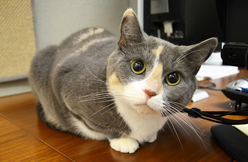 File:Cat-care cat-nutrition-tips overweight body4 left.jpg
