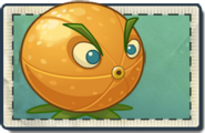 Citron Seed Packet
